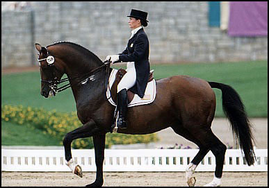 Modification Règlement Dressage