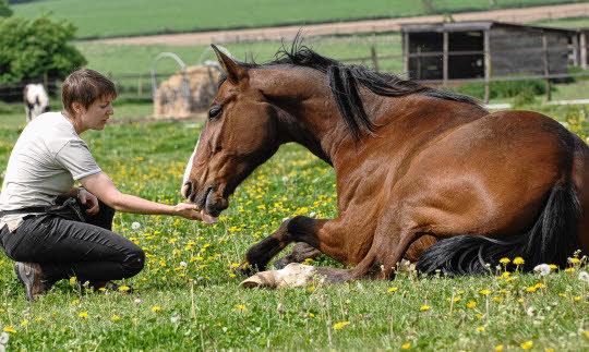Adapter nos structures en lien avec nos fonctionnements pour améliorer le bien-être de notre cavalerie