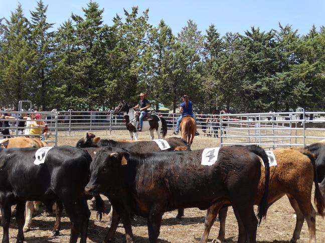 Equitation Western et de Travail