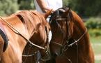 L'observatoire économique régional du cheval en Corse