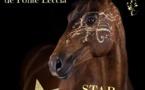 STARS HORSE 2019