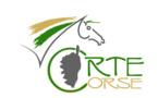 Assemblée Générale du CRTE le 20 janvier 2013: Procès verbal, bilan d'activité 2012, budget prévisonnel 2013
