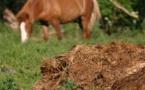 Gestion et valorisation du fumier de cheval et équarrissage