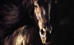 OER de la filière équine Corse 2012-2013: Les établissements équestres